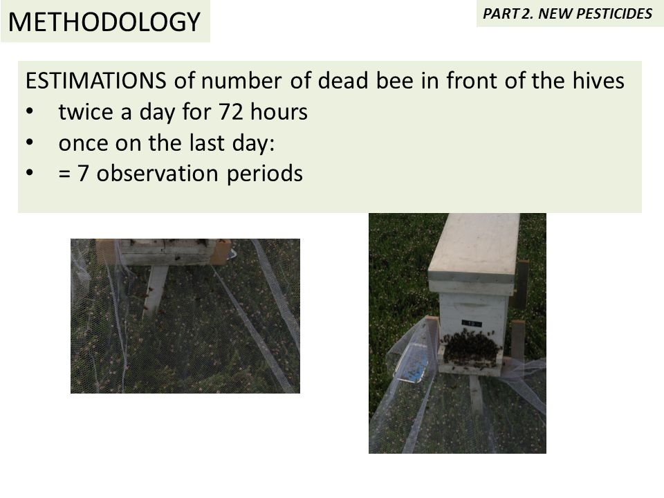 ESTIMATIONS of number of dead bee in front of the hives twice a day for 72 hours once on the last day: = 7 observation periods METHODOLOGY PART 2.