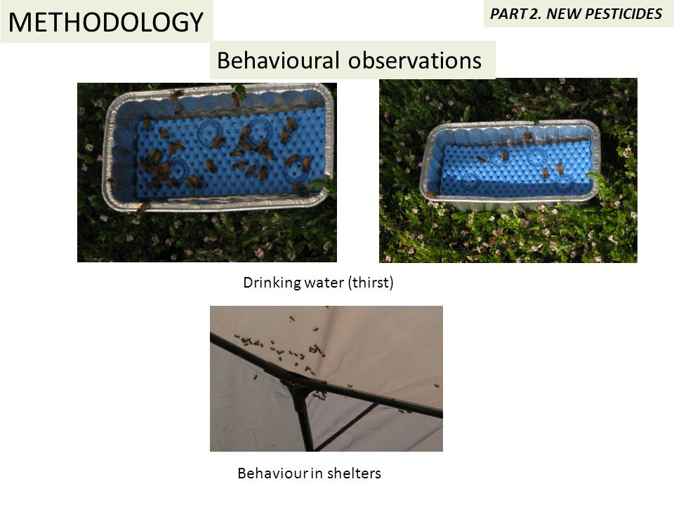 Behavioural observations Drinking water (thirst) Behaviour in shelters METHODOLOGY PART 2.