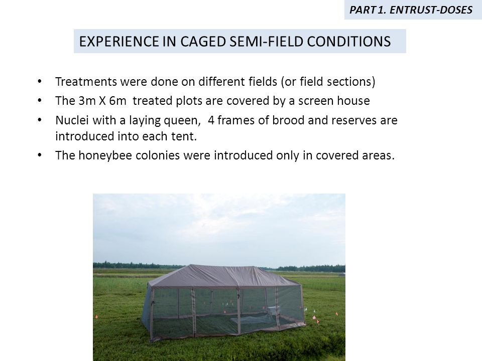 Treatments were done on different fields (or field sections) The 3m X 6m treated plots are covered by a screen house Nuclei with a laying queen, 4 frames of brood and reserves are introduced into each tent.