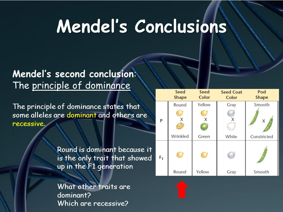 Mendels Conclusions Mendels second conclusion: The principle of dominance The principle of dominance states that some alleles are dominant and others