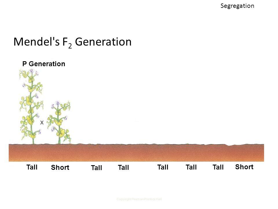 Copyright Pearson Prentice Hall Mendel s F 2 Generation P Generation F 1 Generation Tall Short F 2 Generation Segregation