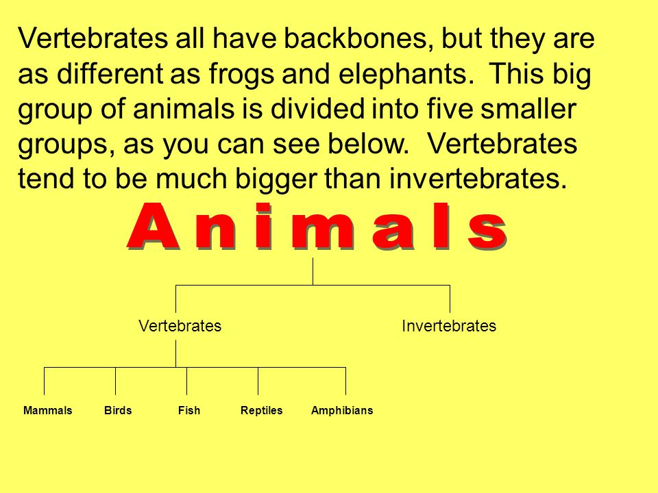 VertebratesInvertebrates Mammals Birds Fish Reptiles Amphibians Vertebrates all have backbones, but they are as different as frogs and elephants. This