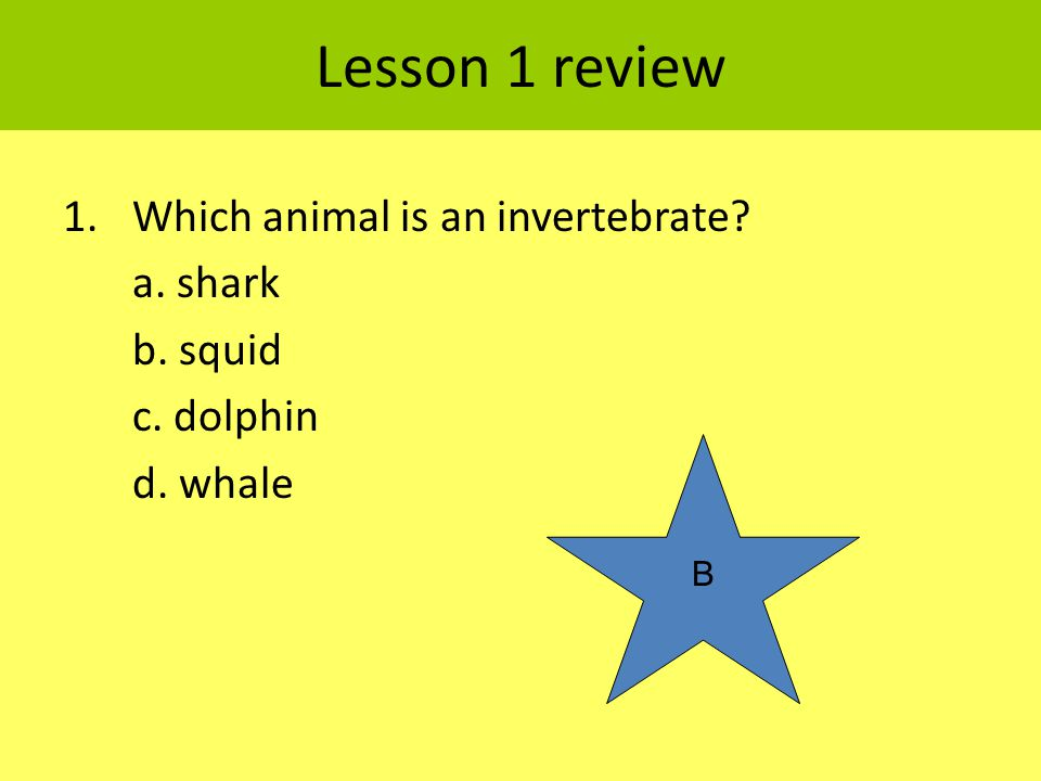 Lesson 1 review 1.Which animal is an invertebrate? a. shark b. squid c. dolphin d. whale B