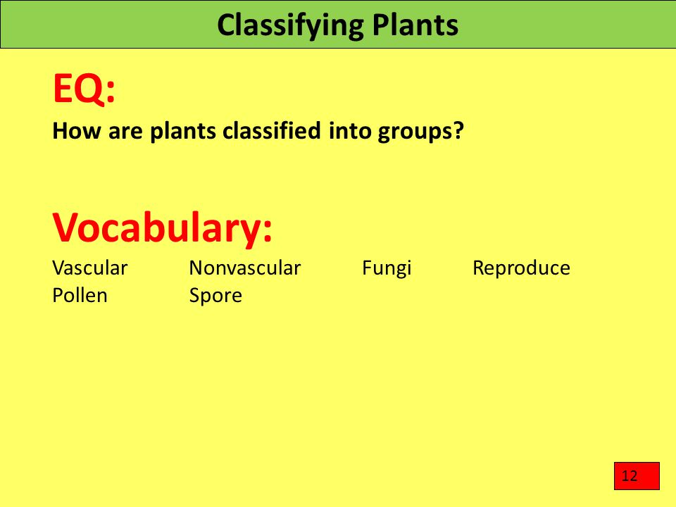 Classifying Plants EQ: How are plants classified into groups? Vocabulary: Vascular Nonvascular Fungi Reproduce Pollen Spore 12