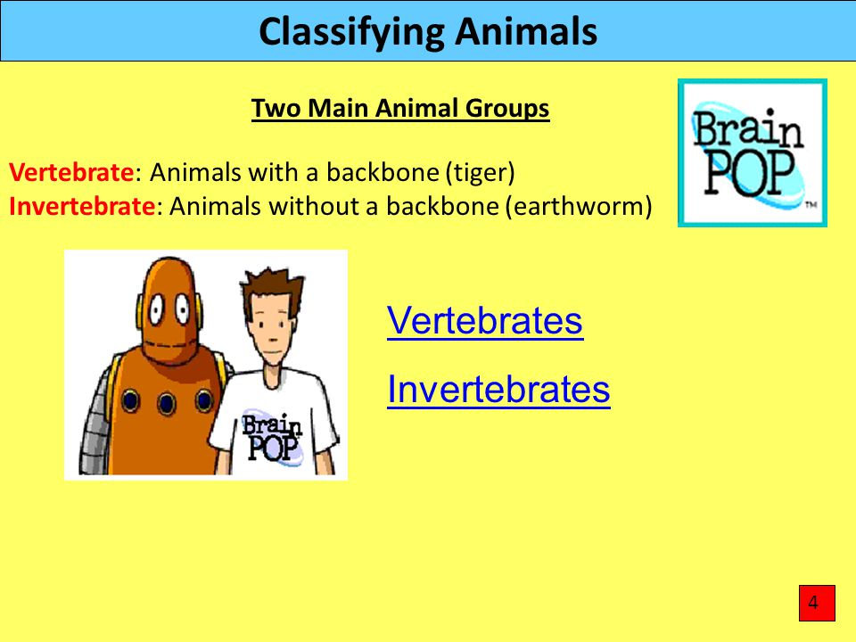 Classifying Animals Vertebrate: Animals with a backbone (tiger) Invertebrate: Animals without a backbone (earthworm) Two Main Animal Groups 4 Vertebra