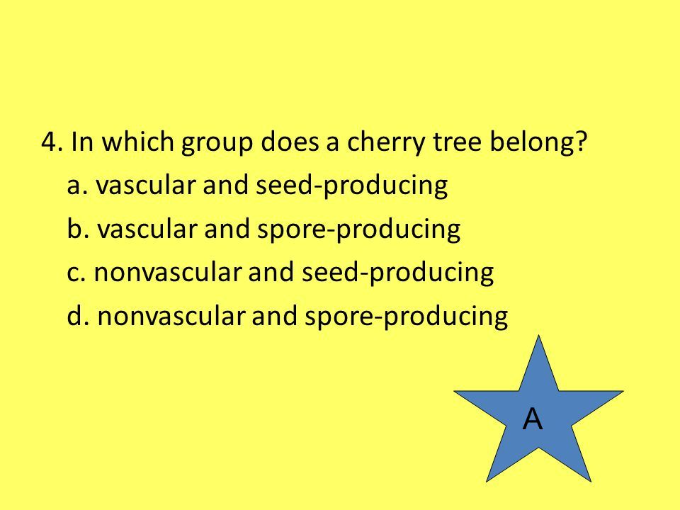 4. In which group does a cherry tree belong? a. vascular and seed-producing b. vascular and spore-producing c. nonvascular and seed-producing d. nonva