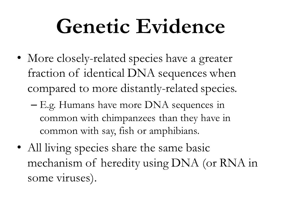 Genetic Evidence More closely-related species have a greater fraction of identical DNA sequences when compared to more distantly-related species. – E.