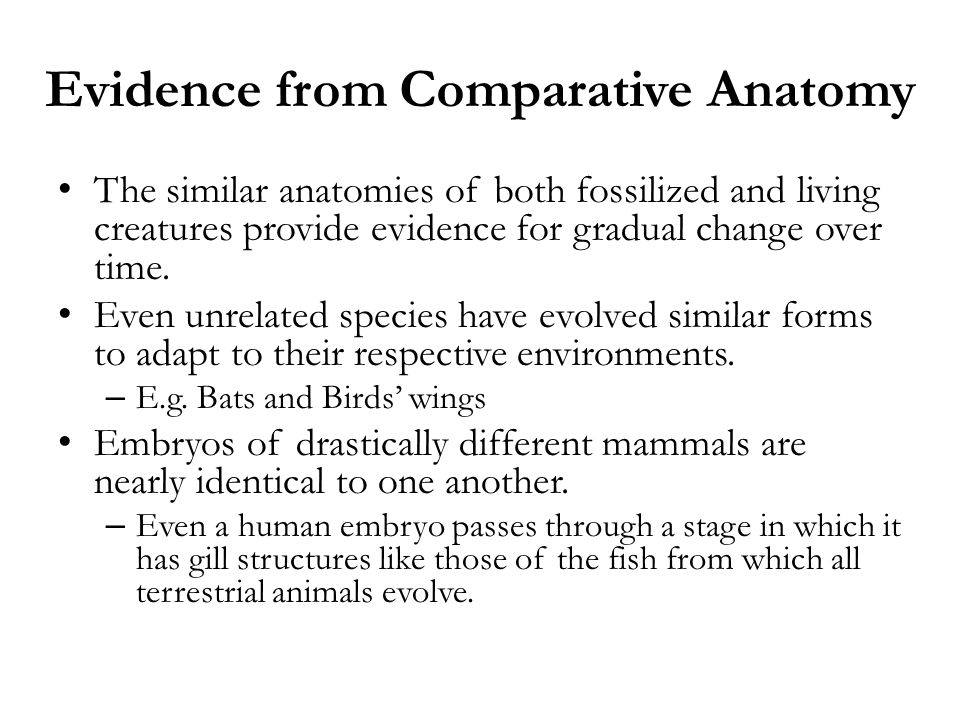 Evidence from Comparative Anatomy The similar anatomies of both fossilized and living creatures provide evidence for gradual change over time. Even un