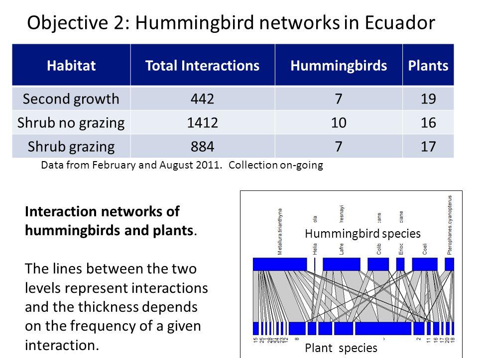 Objective 2: Hummingbird networks in Ecuador HabitatTotal InteractionsHummingbirdsPlants Second growth442719 Shrub no grazing14121016 Shrub grazing884717 Data from February and August 2011.