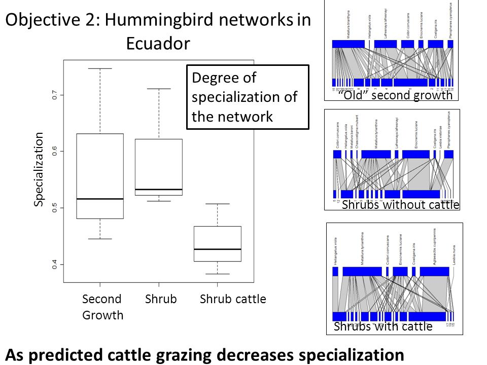 Objective 2: Hummingbird networks in Ecuador Old second growth Shrubs without cattle Shrubs with cattle As predicted cattle grazing decreases specialization Specialization Second Growth Shrub cattleShrub Degree of specialization of the network