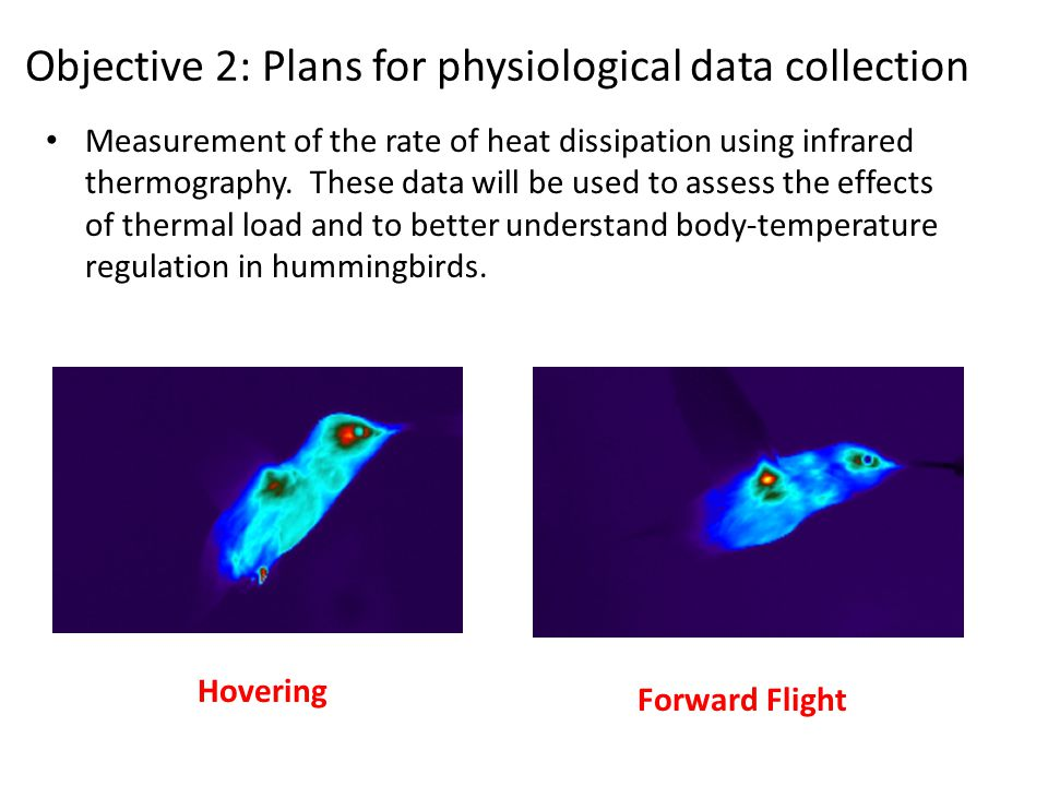 Objective 2: Plans for physiological data collection Measurement of the rate of heat dissipation using infrared thermography.