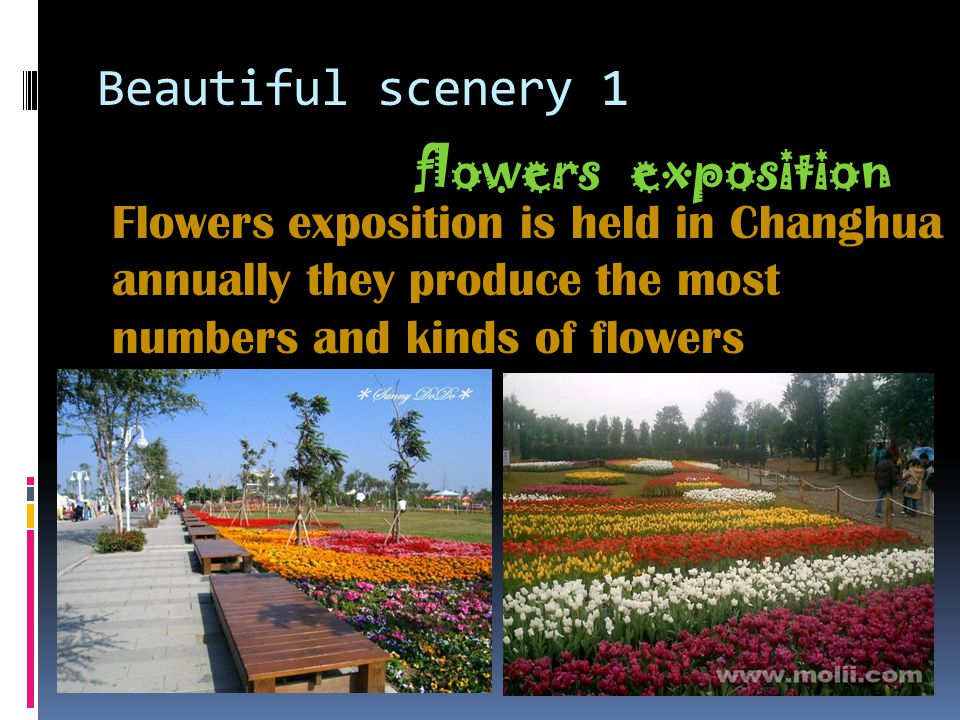 Beautiful scenery 1 flowers exposition Flowers exposition is held in Changhua annually they produce the most numbers and kinds of flowers