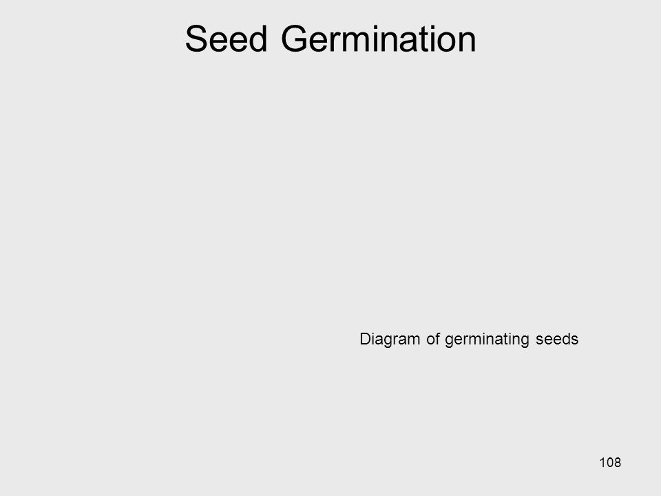 Diagram of germinating seeds 108 Seed Germination