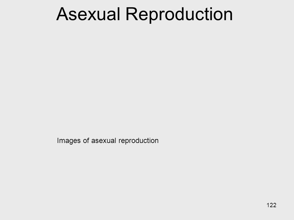 Images of asexual reproduction 122 Asexual Reproduction