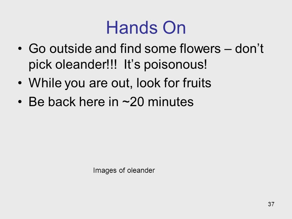 Images of oleander Hands On Go outside and find some flowers – dont pick oleander!!! Its poisonous! While you are out, look for fruits Be back here in