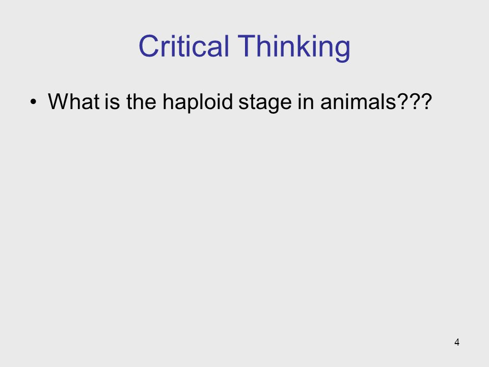 4 Critical Thinking What is the haploid stage in animals???
