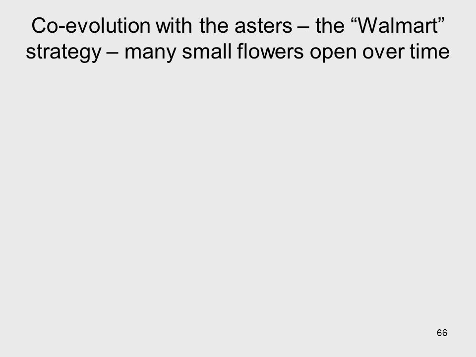 66 Co-evolution with the asters – the Walmart strategy – many small flowers open over time