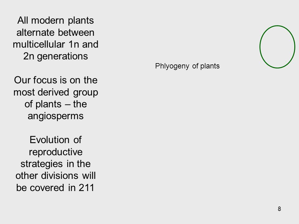 Phlyogeny of plants 8 All modern plants alternate between multicellular 1n and 2n generations Our focus is on the most derived group of plants – the angiosperms Evolution of reproductive strategies in the other divisions will be covered in 211