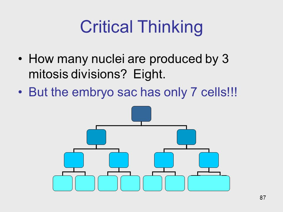 87 Critical Thinking How many nuclei are produced by 3 mitosis divisions.