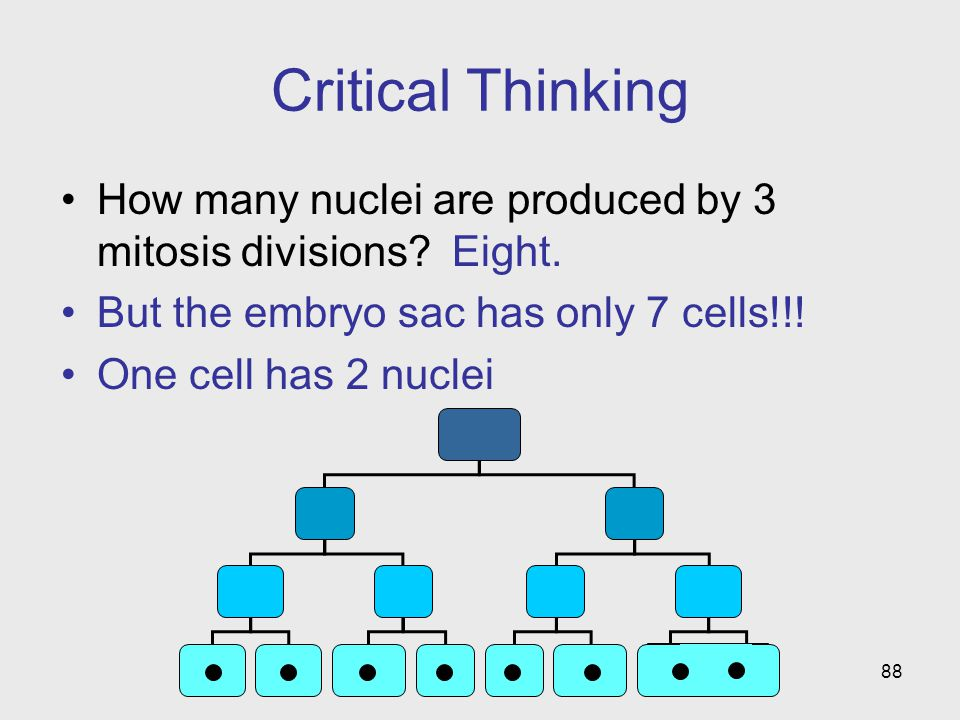 88 Critical Thinking How many nuclei are produced by 3 mitosis divisions.