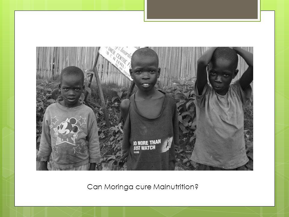 Can Moringa cure Malnutrition?