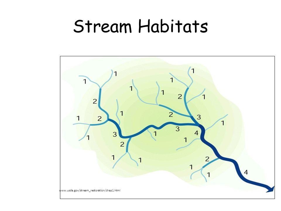 Stream Habitats www.usda.gov/stream_restoration/chap1.html