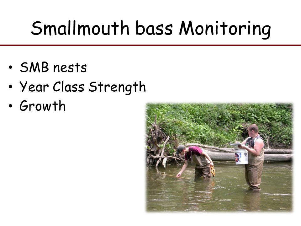 Smallmouth bass Monitoring SMB nests Year Class Strength Growth