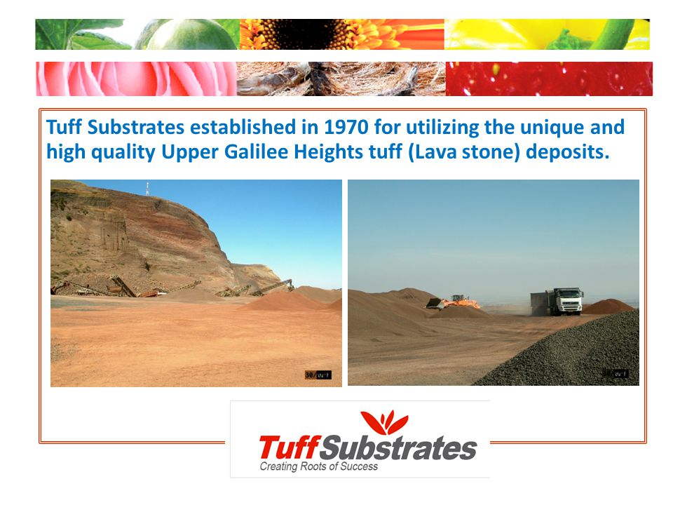 Tuff Substrates established in 1970 for utilizing the unique and high quality Upper Galilee Heights tuff (Lava stone) deposits.