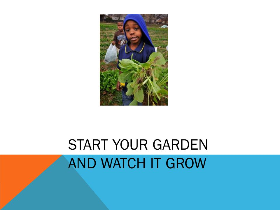 START YOUR GARDEN AND WATCH IT GROW