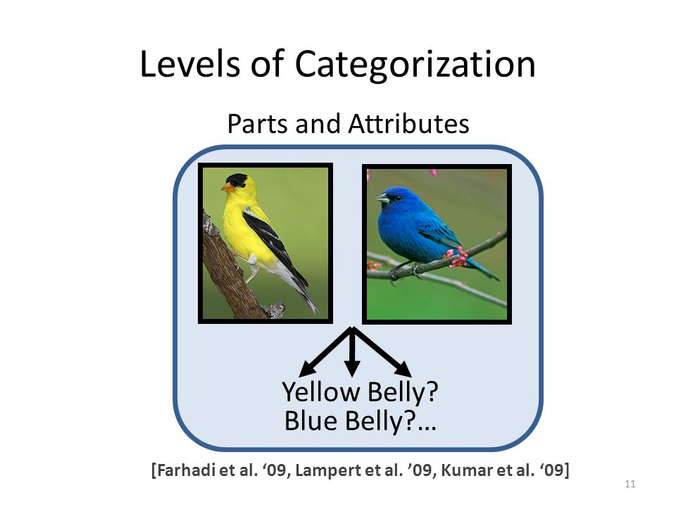 Levels of Categorization Yellow Belly. Blue Belly … Parts and Attributes 11 [Farhadi et al.