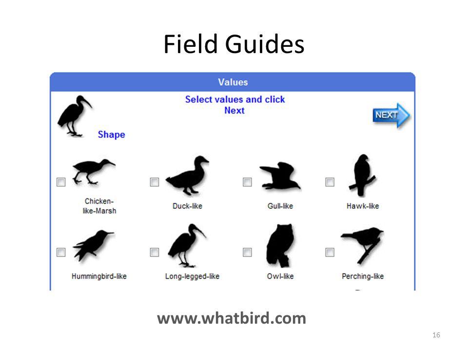 Field Guides www.whatbird.com 16