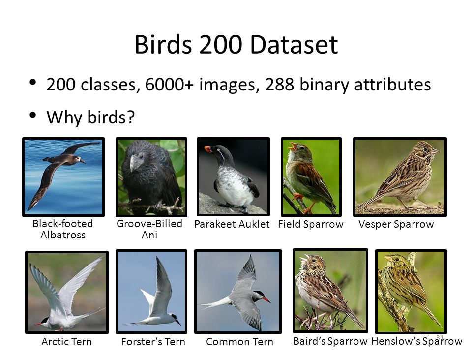 Birds 200 Dataset 200 classes, 6000+ images, 288 binary attributes Why birds? Black-footed Albatross Groove-Billed Ani Parakeet AukletField SparrowVes
