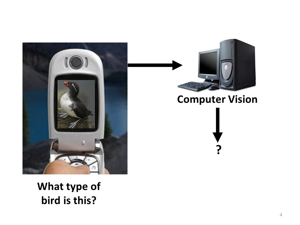 What type of bird is this? 4 Computer Vision ?