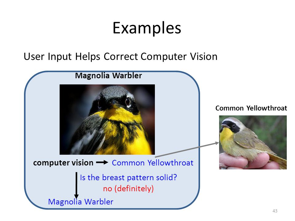 Examples computer vision Magnolia Warbler User Input Helps Correct Computer Vision Is the breast pattern solid? no (definitely) Common Yellowthroat Ma