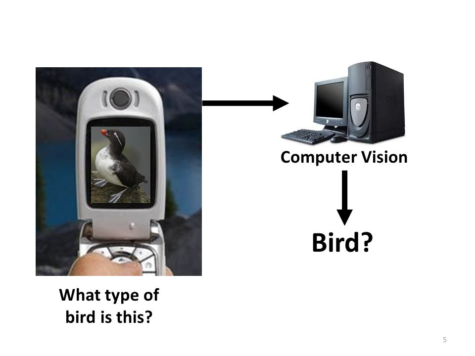 What type of bird is this? 5 Bird? Computer Vision