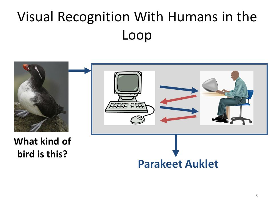 Visual Recognition With Humans in the Loop Parakeet Auklet What kind of bird is this 8
