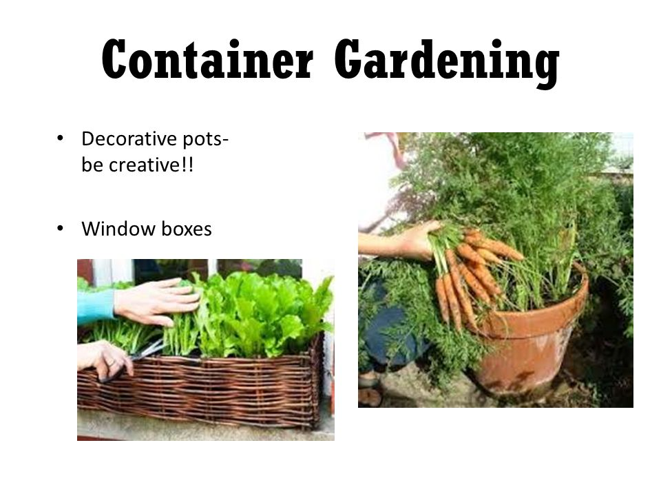 Decorative pots- be creative!! Window boxes Container Gardening