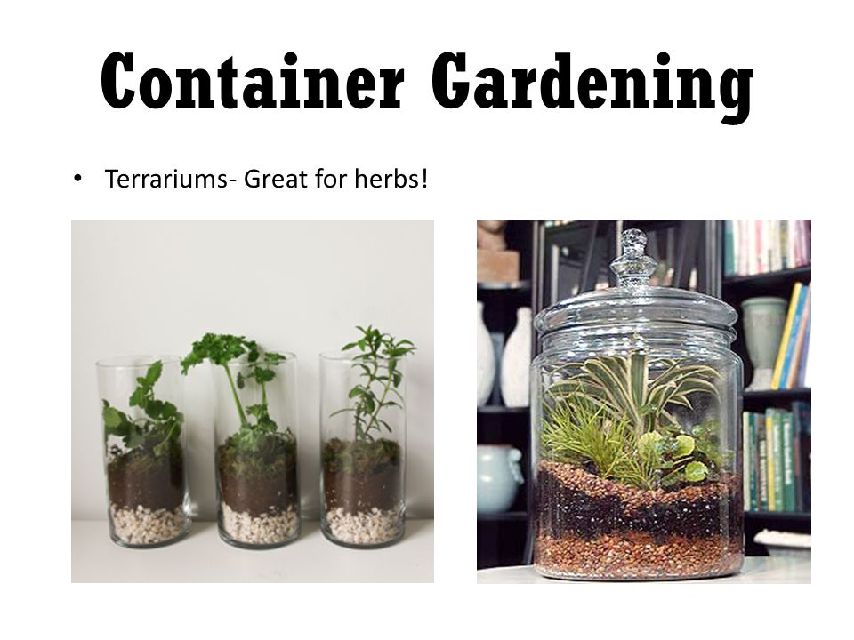 Terrariums- Great for herbs!