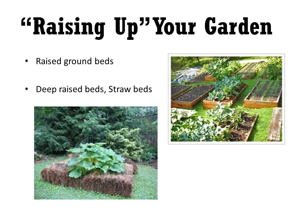 Raised ground beds Deep raised beds, Straw beds Raising Up Your Garden