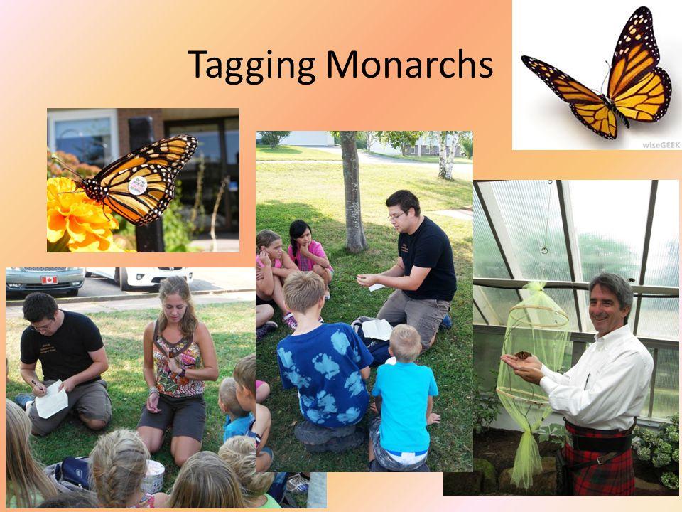 Tagging Monarchs