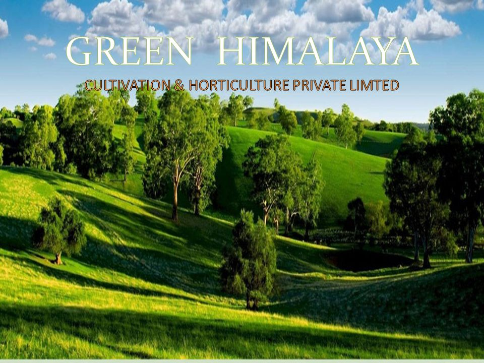 Green Himalaya cultivation & horticulture private limited is one of the most aggressive and innovative company in terms of providing the complete business opportunity in the field of green house /poly house and broad based floriculture for the domestic and the export markets we are one of the very few companies to provide in depth end to end solutions, promoting a tradition of modern agriculture.