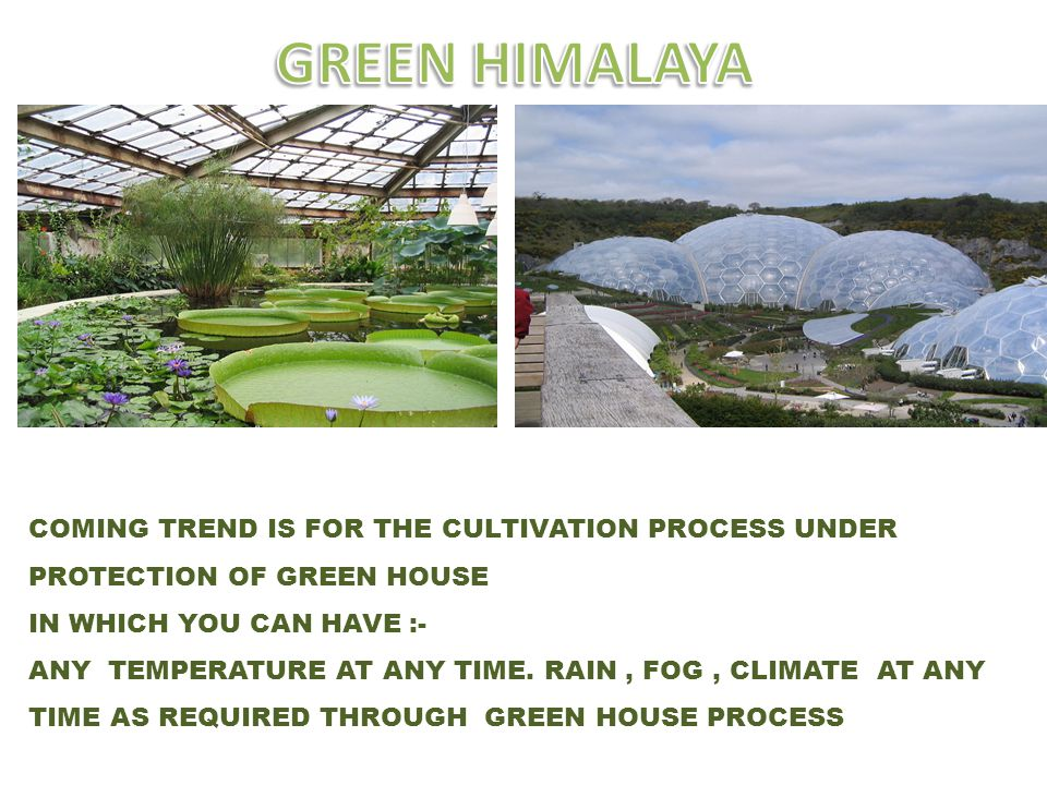 COMING TREND IS FOR THE CULTIVATION PROCESS UNDER PROTECTION OF GREEN HOUSE IN WHICH YOU CAN HAVE :- ANY TEMPERATURE AT ANY TIME. RAIN, FOG, CLIMATE A