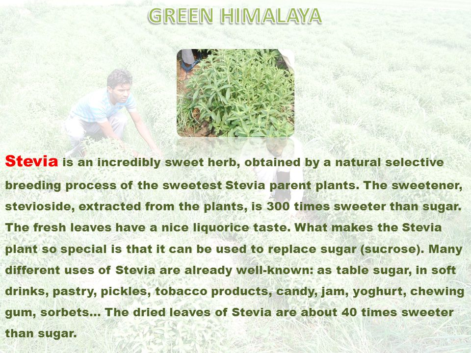 Stevia is an incredibly sweet herb, obtained by a natural selective breeding process of the sweetest Stevia parent plants.