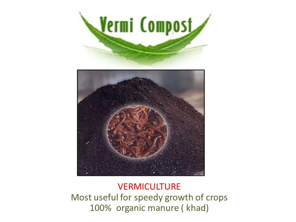 VERMICULTURE Most useful for speedy growth of crops 100% organic manure ( khad)