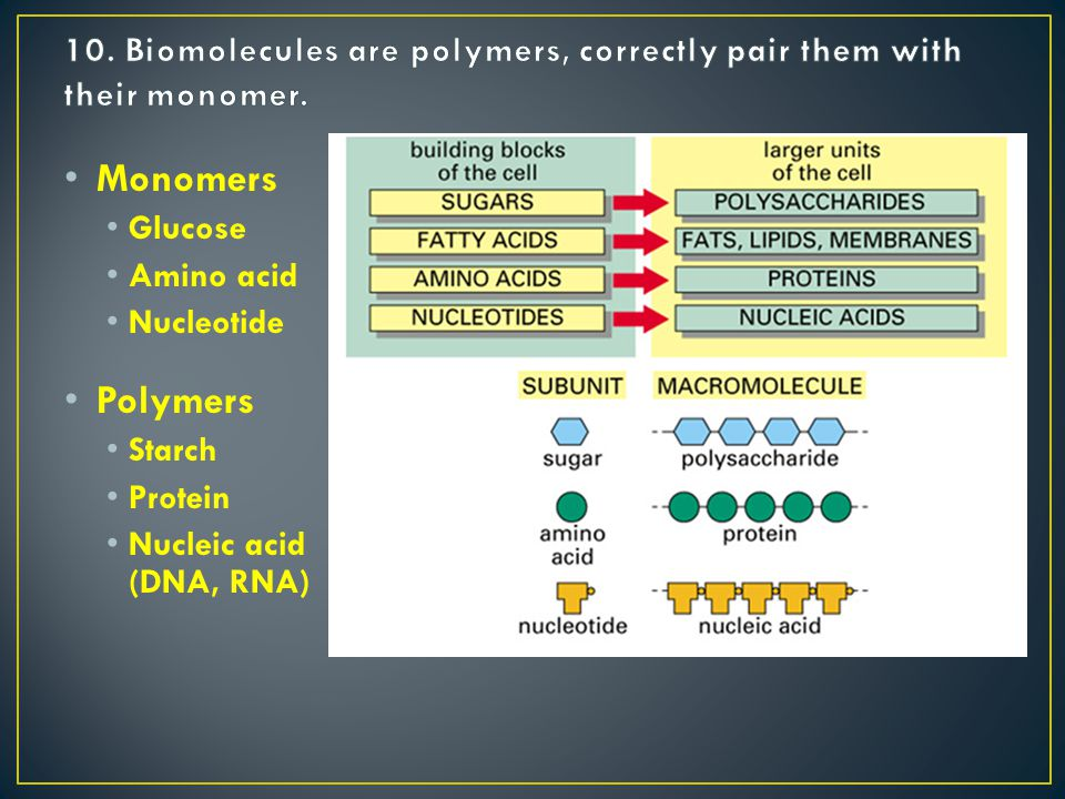 Monomers Glucose Amino acid Nucleotide Polymers Starch Protein Nucleic acid (DNA, RNA)
