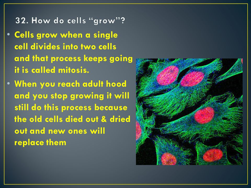 Cells grow when a single cell divides into two cells and that process keeps going it is called mitosis.