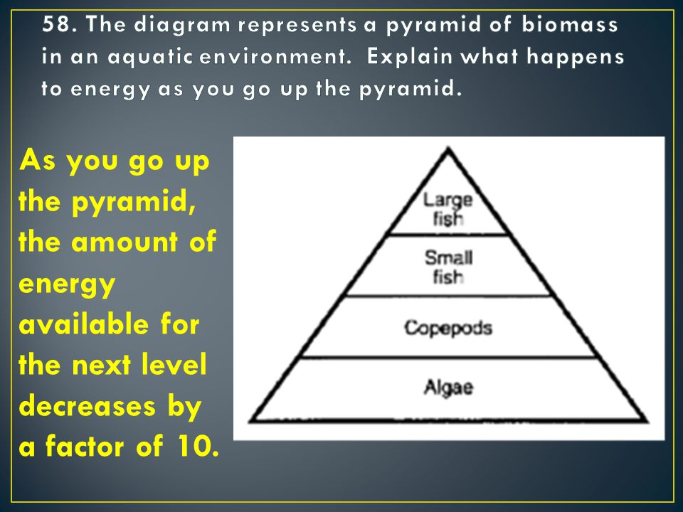 As you go up the pyramid, the amount of energy available for the next level decreases by a factor of 10.