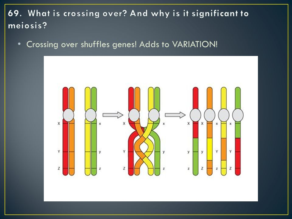 Crossing over shuffles genes! Adds to VARIATION!