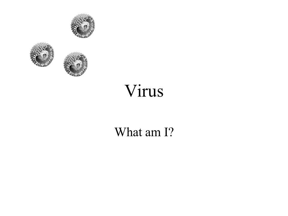 Virus What am I?