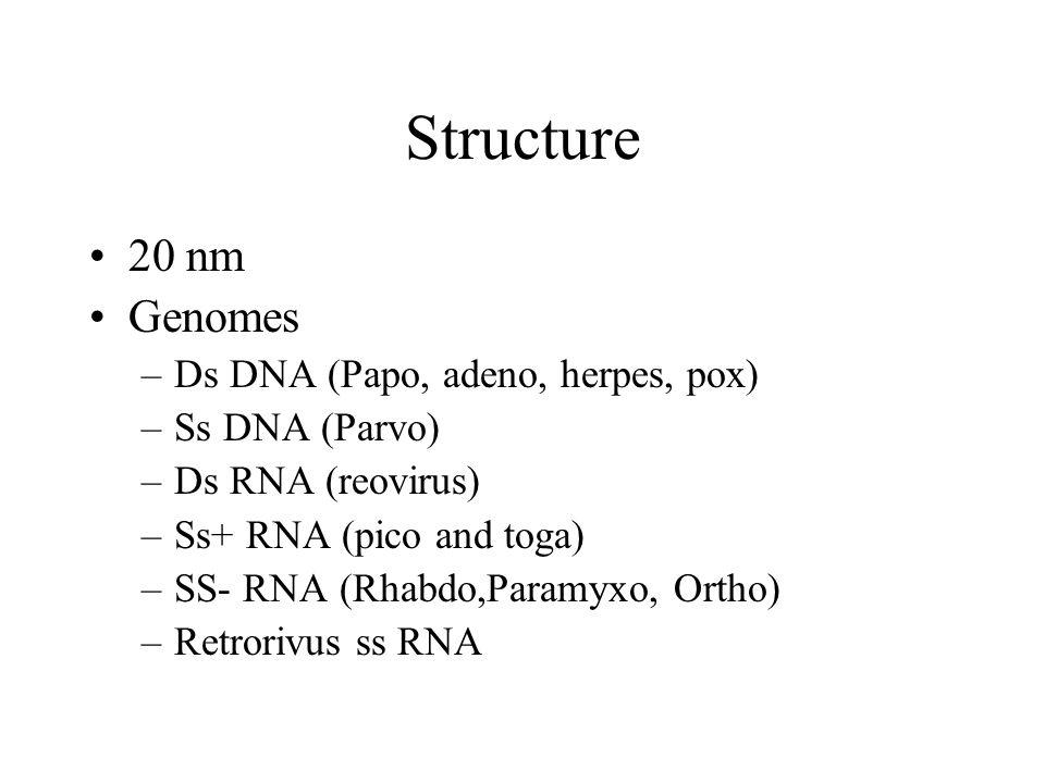 Structure 20 nm Genomes –Ds DNA (Papo, adeno, herpes, pox) –Ss DNA (Parvo) –Ds RNA (reovirus) –Ss+ RNA (pico and toga) –SS- RNA (Rhabdo,Paramyxo, Orth